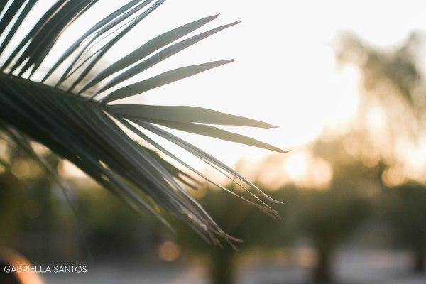 palmquote-1