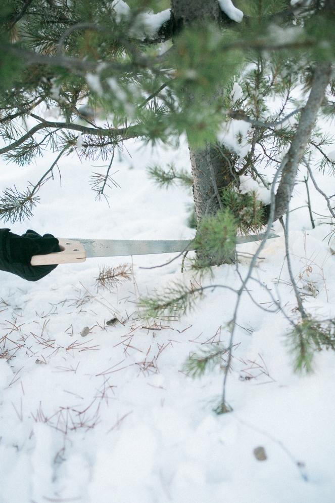 Unitah-Christmas-Tree-Cutting-GabriellaSantosPhotography-WEB-15