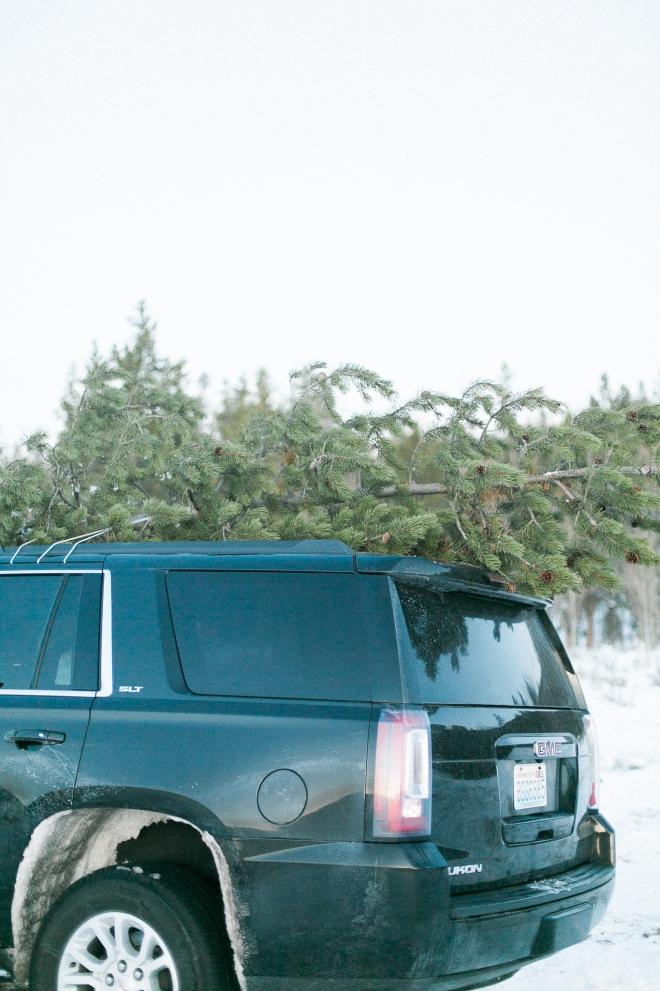 Unitah-Christmas-Tree-Cutting-GabriellaSantosPhotography-WEB-26