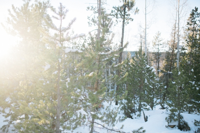 Unitah-Christmas-Tree-Cutting-GabriellaSantosPhotography-WEB-4