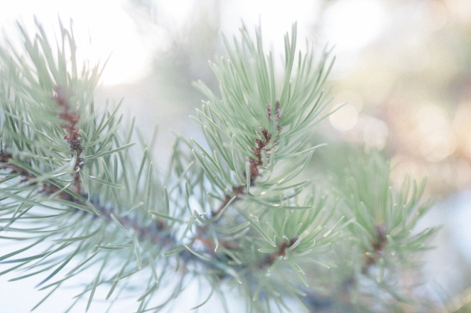 Unitah-Christmas-Tree-Cutting-GabriellaSantosPhotography-WEB-7