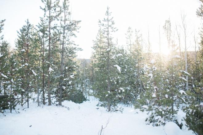 Unitah-Christmas-Tree-Cutting-GabriellaSantosPhotography-WEB-9