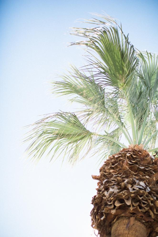 Jenn-Scott-Palm-Springs-Wedding-Gabriella-Santos-Photography-Lago-Vista-WEB-40