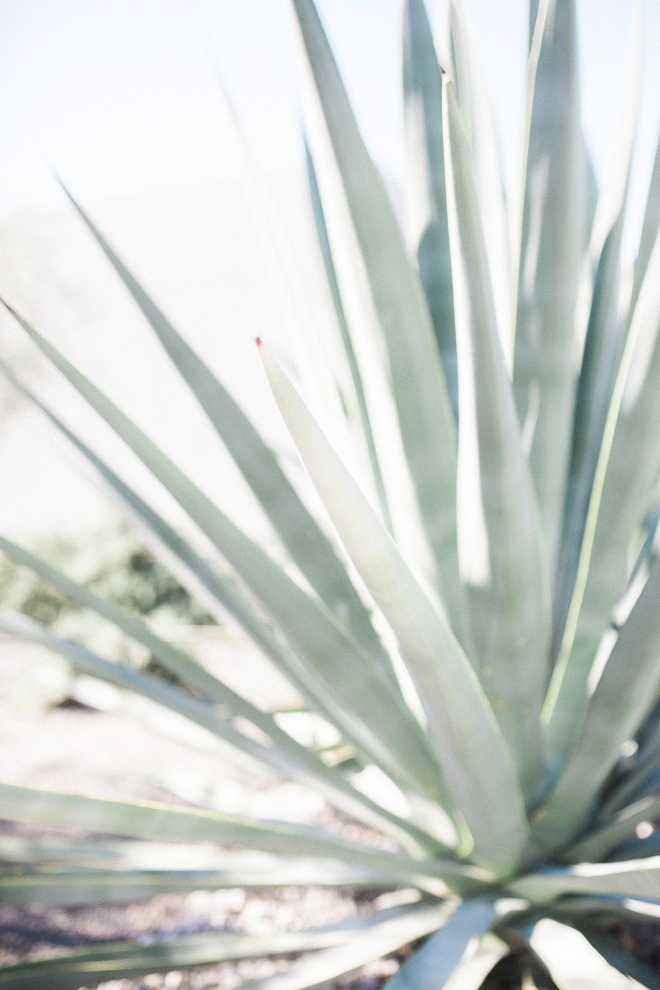 Jenn-Scott-Palm-Springs-Wedding-Gabriella-Santos-Photography-Lago-Vista-WEB-5